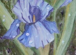Iris in Rain